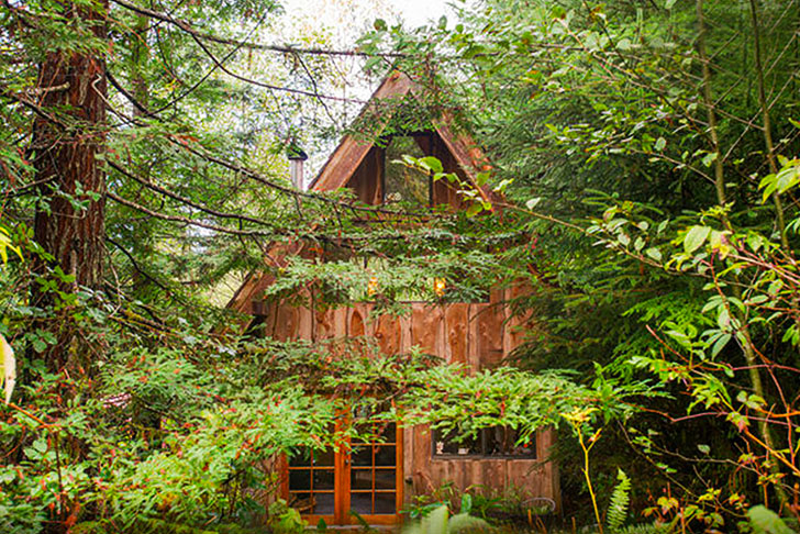 Brian-Schulz-Tiny-Japanese-Forest-House-1