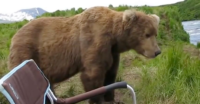 alaskan-brown-bear-photo