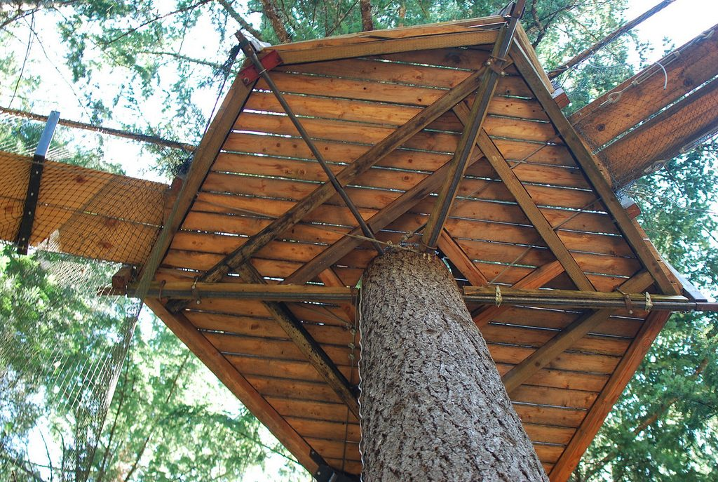 Outnabout-treesort-oregon11