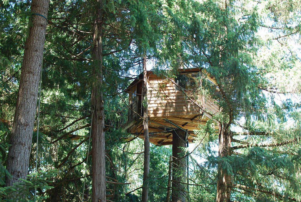 Outnabout-treesort-oregon13