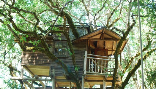 The Out'n'About 'Treesort' in Oregon Has World's Highest Concentration of Treehouses
