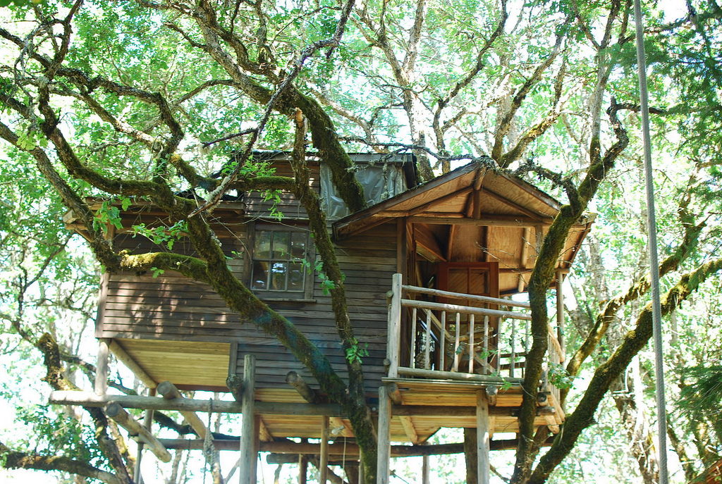 The Out N About Treesort In Oregon Has World S Highest Concentration Of Treehouses