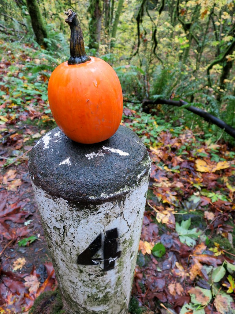 Someone had even decorated many of the mile markers (they religiously point out every quarter mile) with mini pumpkins. It couldn't possibly have gotten any more fall-like;)