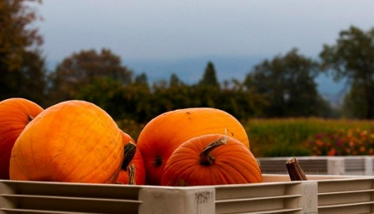 10 Oregon Pumpkin Patches for Hay Rides, Corn Mazes and More