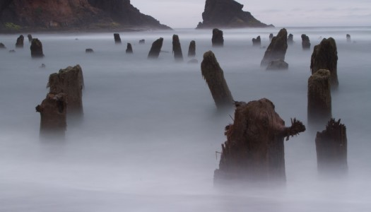 The Neskowin Ghost Forest of Oregon is Incredible