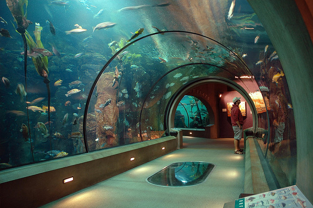 Oregon Coast Aquarium by OCVA