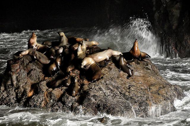 Sea Lion Caves By Tony Cyphert via Flickr
