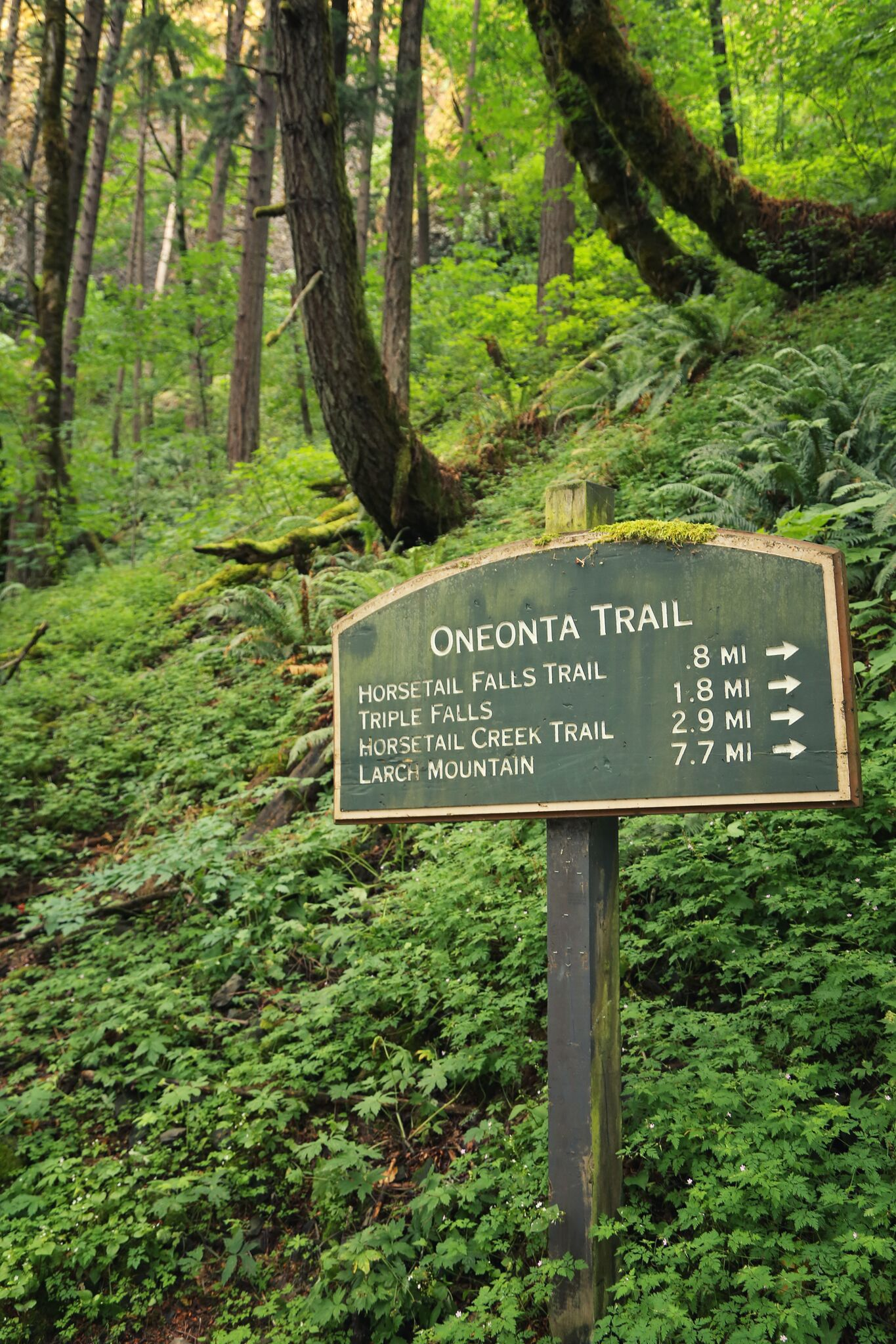 oneonta trail