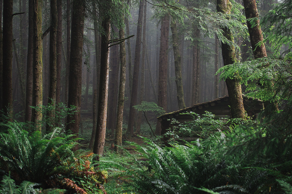cabin_forest_oregon