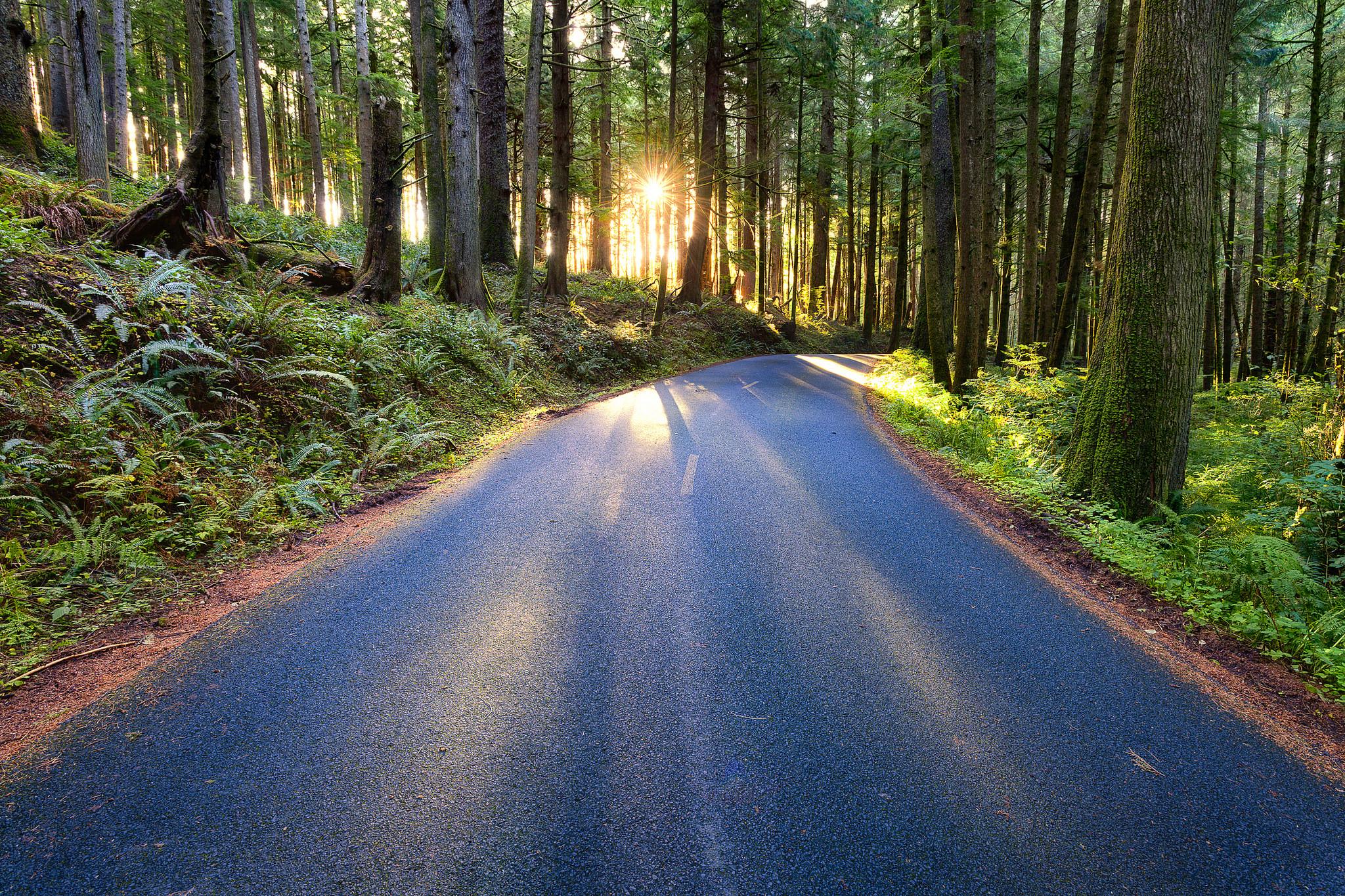forest_road_oregon