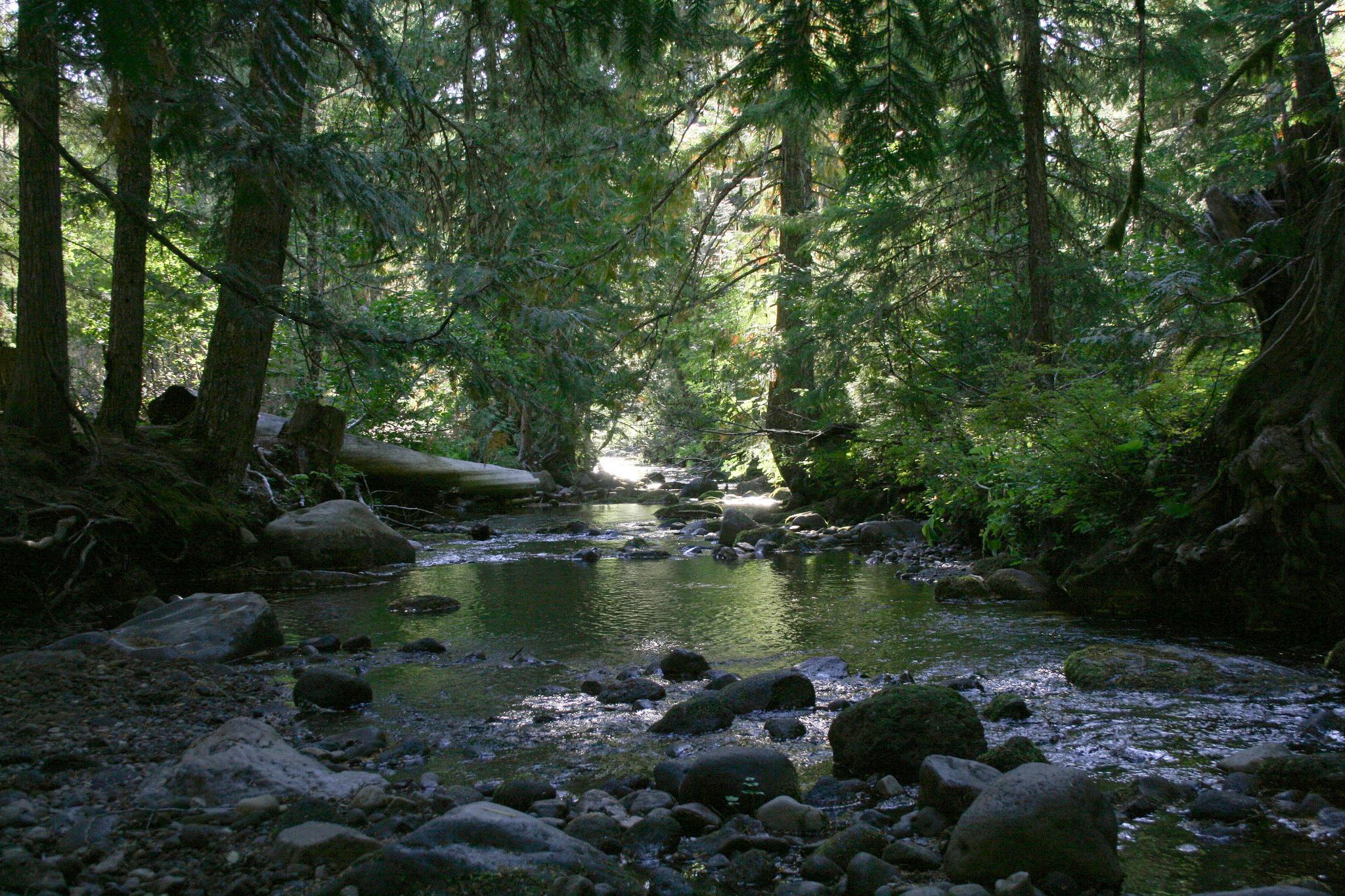 mt_hood_national_forest