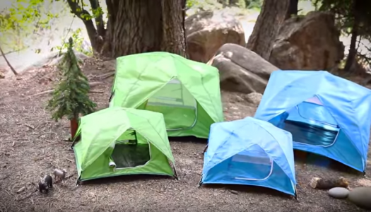 These 'Tiny Tents' Are Perfect For Your Furry Little Friends