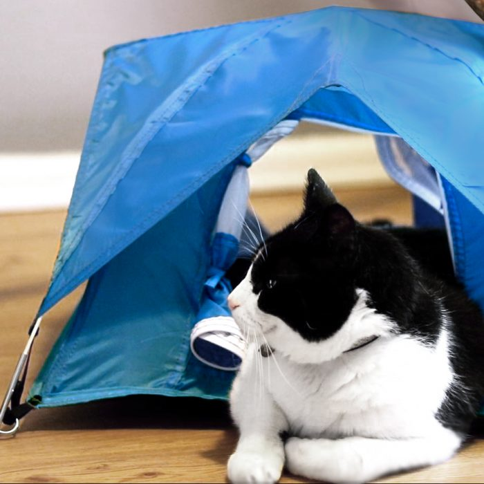 tinytents_cat_square_002-1-700x700