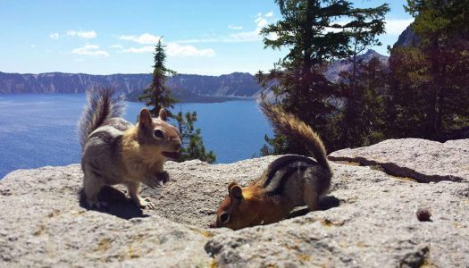 16 Awesome Crater Lake National Park Facts Most People Don't Know