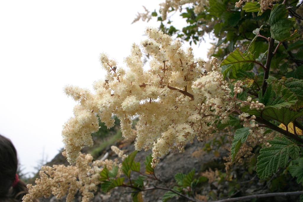 flowers saddle mountain