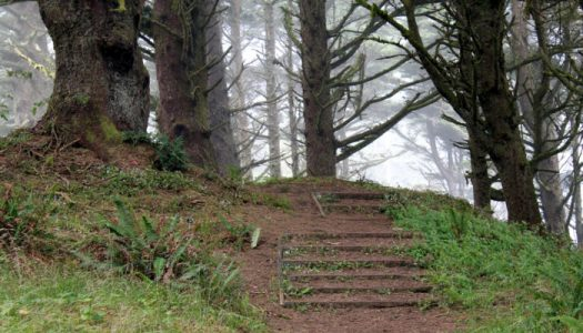 Hike The Magical Hobbit Trail To a Secluded Oregon Beach