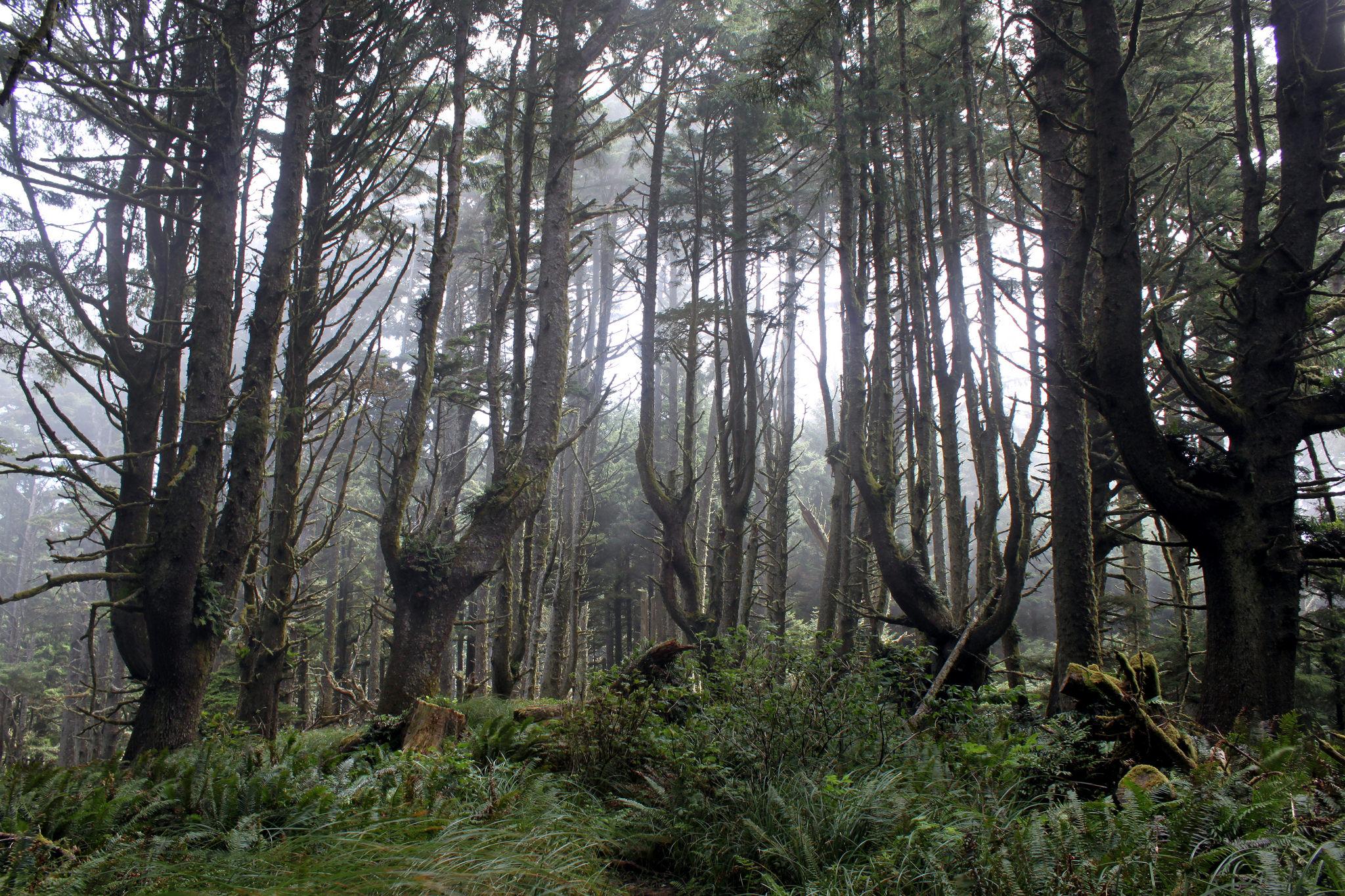 hobbit trail oregon
