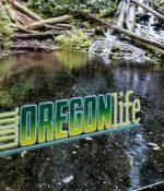 oregon-ducks-decal-03