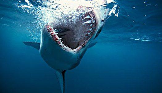 Portland surfer attacked by shark off Oregon coast
