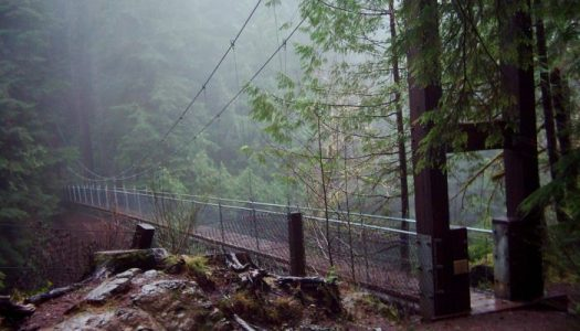 Check out this awesome swinging bridge at Drift Creek Falls