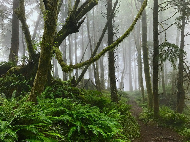 misty forests of tillamook head oregon haunted pacific northwest trails