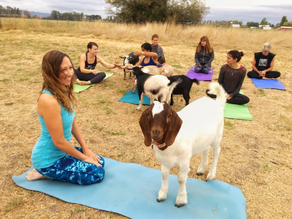 Goat Yoga Field Oregon