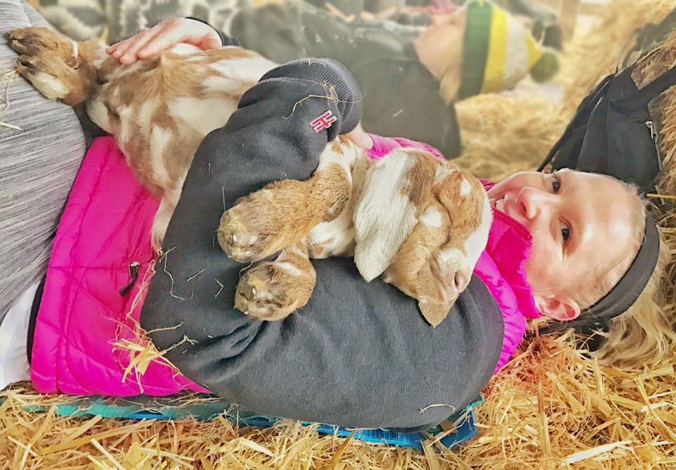 goat-yoga-fun