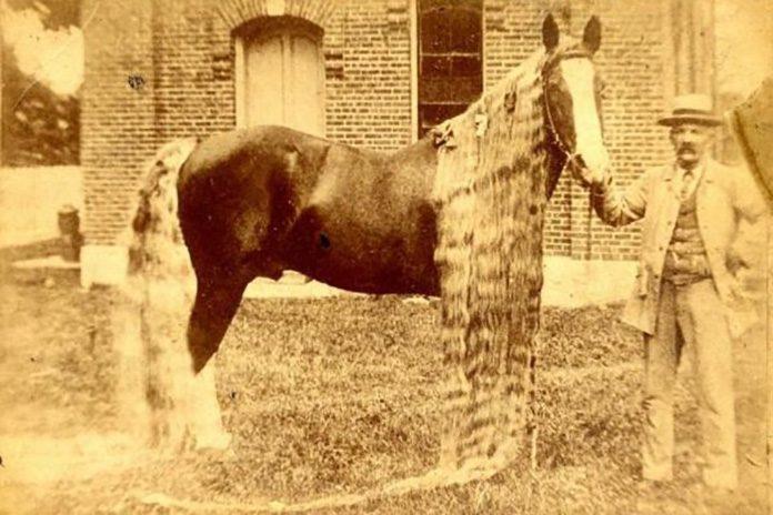 Rare Oregon Horse