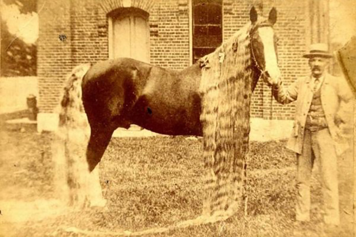 These Rare Oregon Horses Only Existed in the Late 19th
