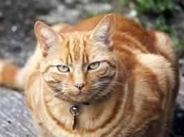 Cat Behavior Lecture