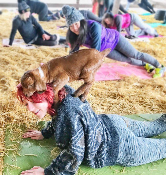 Goat Yoga, Baby