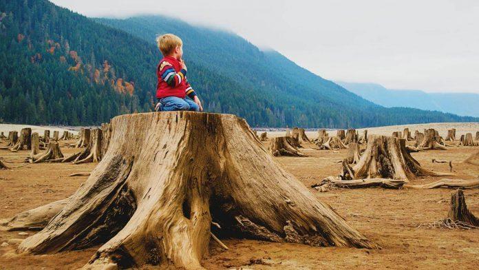Patagonia Plants Tree