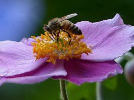 Saving Honey Bees in Oregon