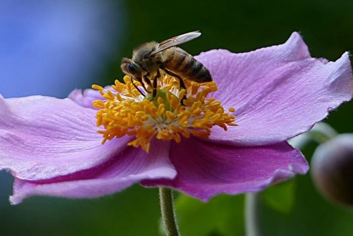 Saving Honey Bees in Oregon