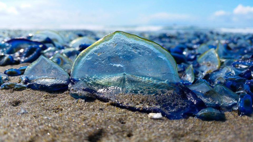 blue tide oregon