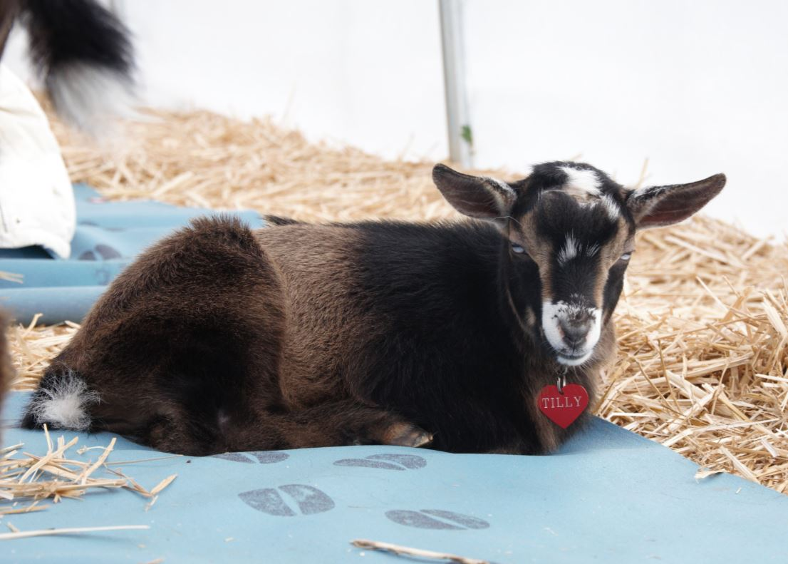 Tilly Baby Goat Yoga