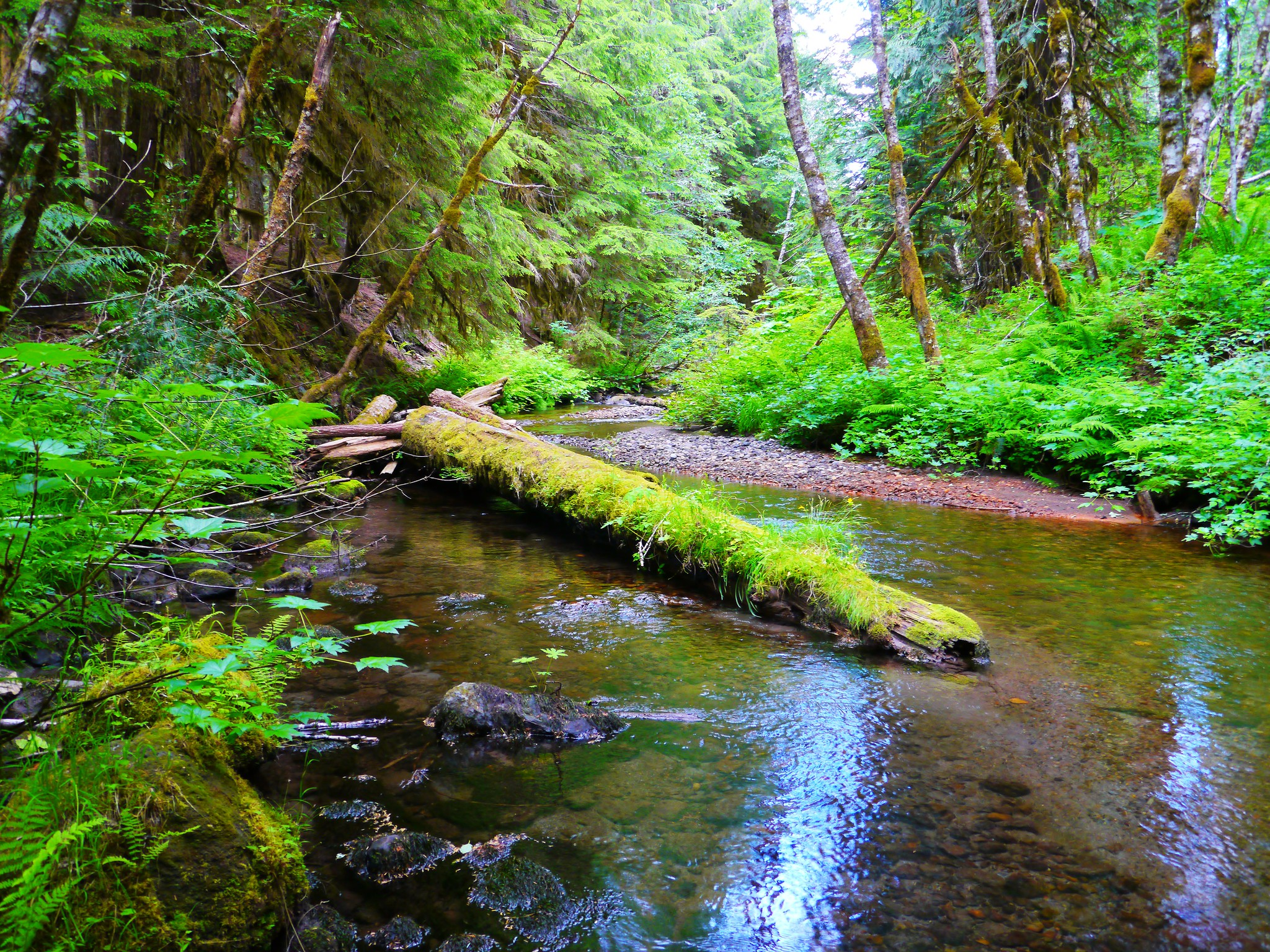 Where To Hike In The Forest Oregon