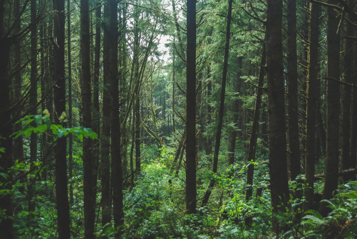 Visit Oregon's Forests