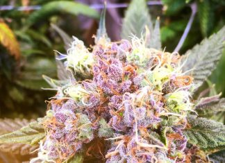 Trichome Farms Oregon Grower Jobs
