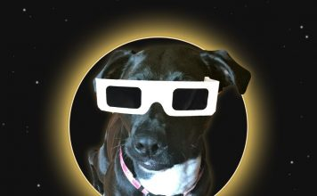 Solar Eclipse Pet Safety Dog