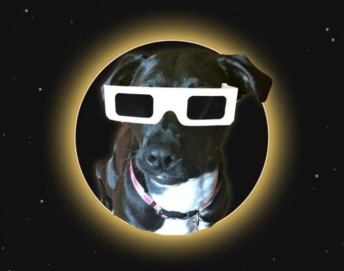 Solar Eclipse Pet Safety Dog
