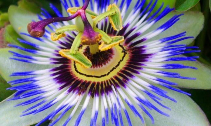 Natural Herbal Medicine Growing in Oregon