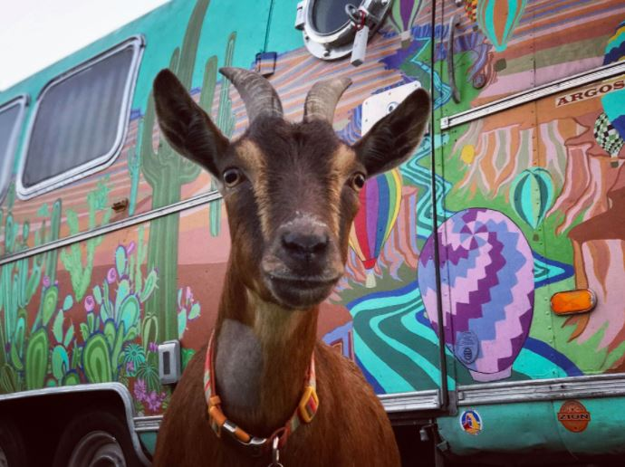 Oregon Couple Airstream Living with Goat
