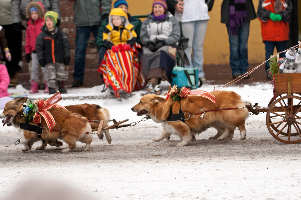 Ashland Christmas Parade 2019.Here S The Most Magical Christmas Parades To Catch In Oregon