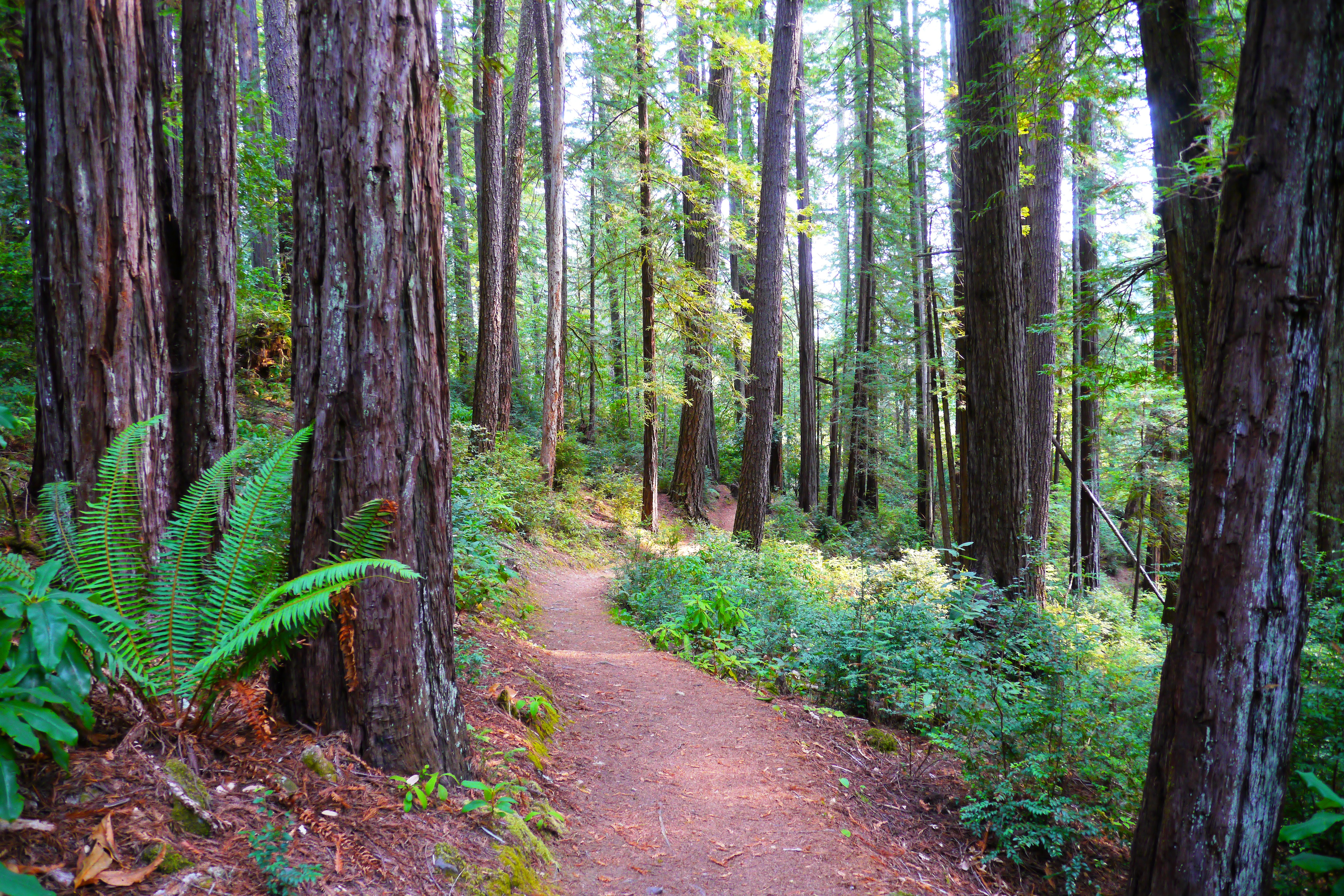 Where to Find the Giant Redwoods of Oregon | That Oregon Life on best of the redwood coast map, giant coastal redwoods, redwoods ca map, redwood highway map, giant forest map, giant redwood national park map, redwood forest map,