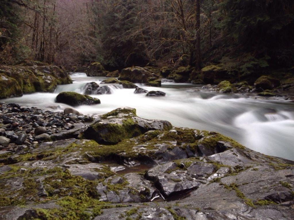 Brice Creek Oregon Where To Hike Cliff Jump Swimming Hole