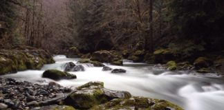 Brice Creek Oregon Where To Hike Cliff Jump Swimming Hole