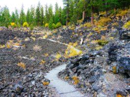 Lava Cast Forest Oregon