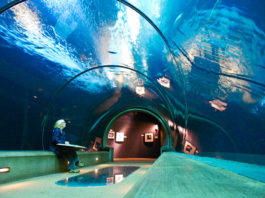 aquarium closed covid 19 Oregon closures