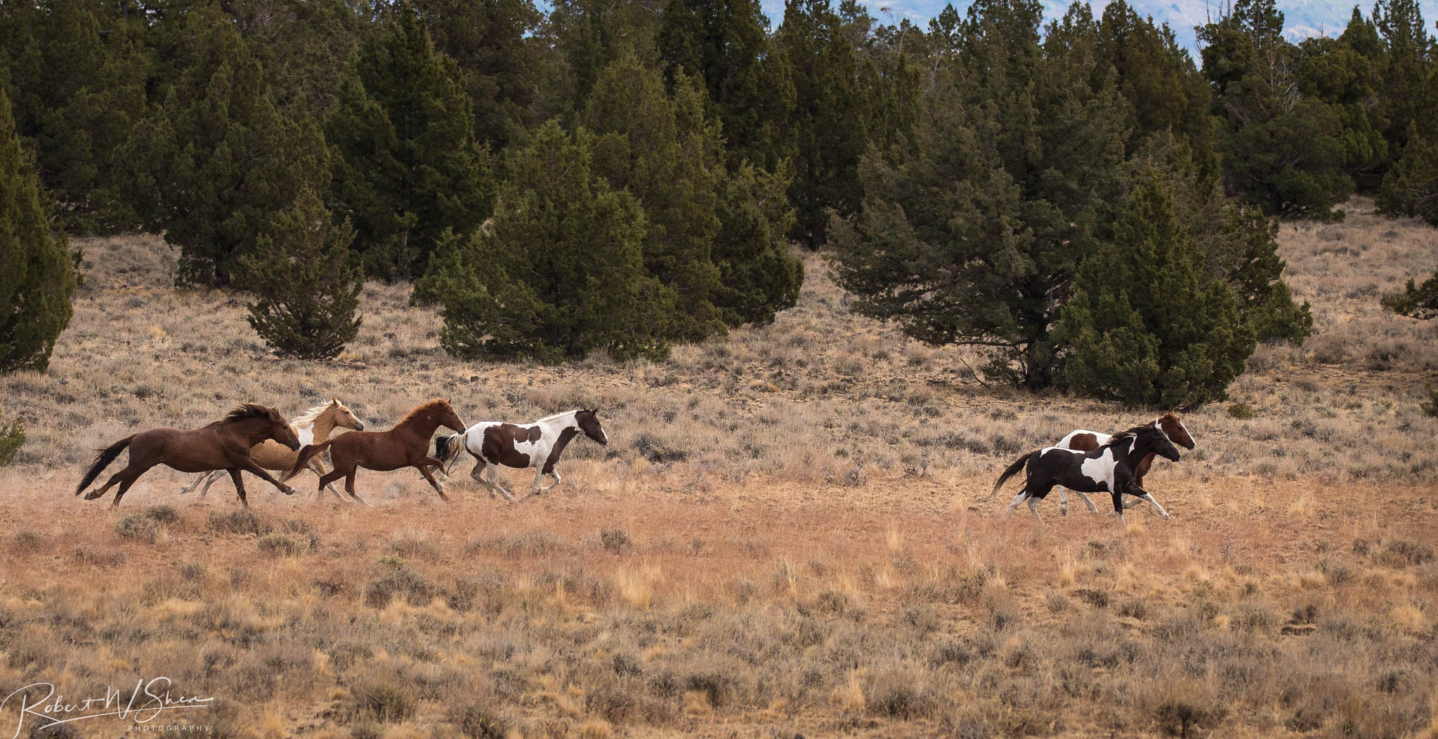 Where to see wild horses Oregon